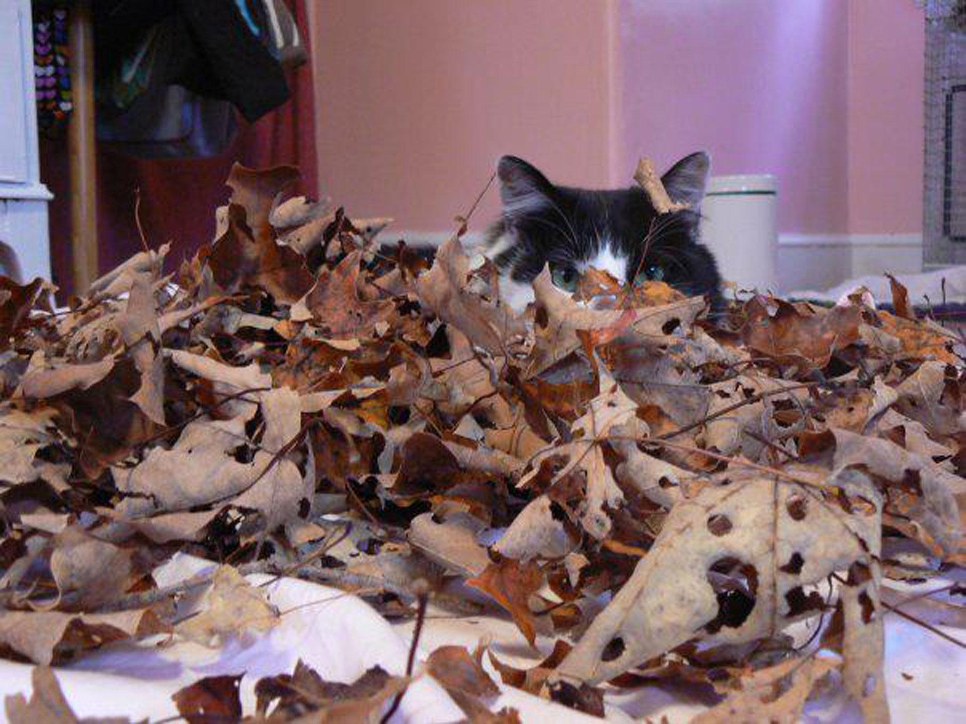 cat hiding in autumn leaves