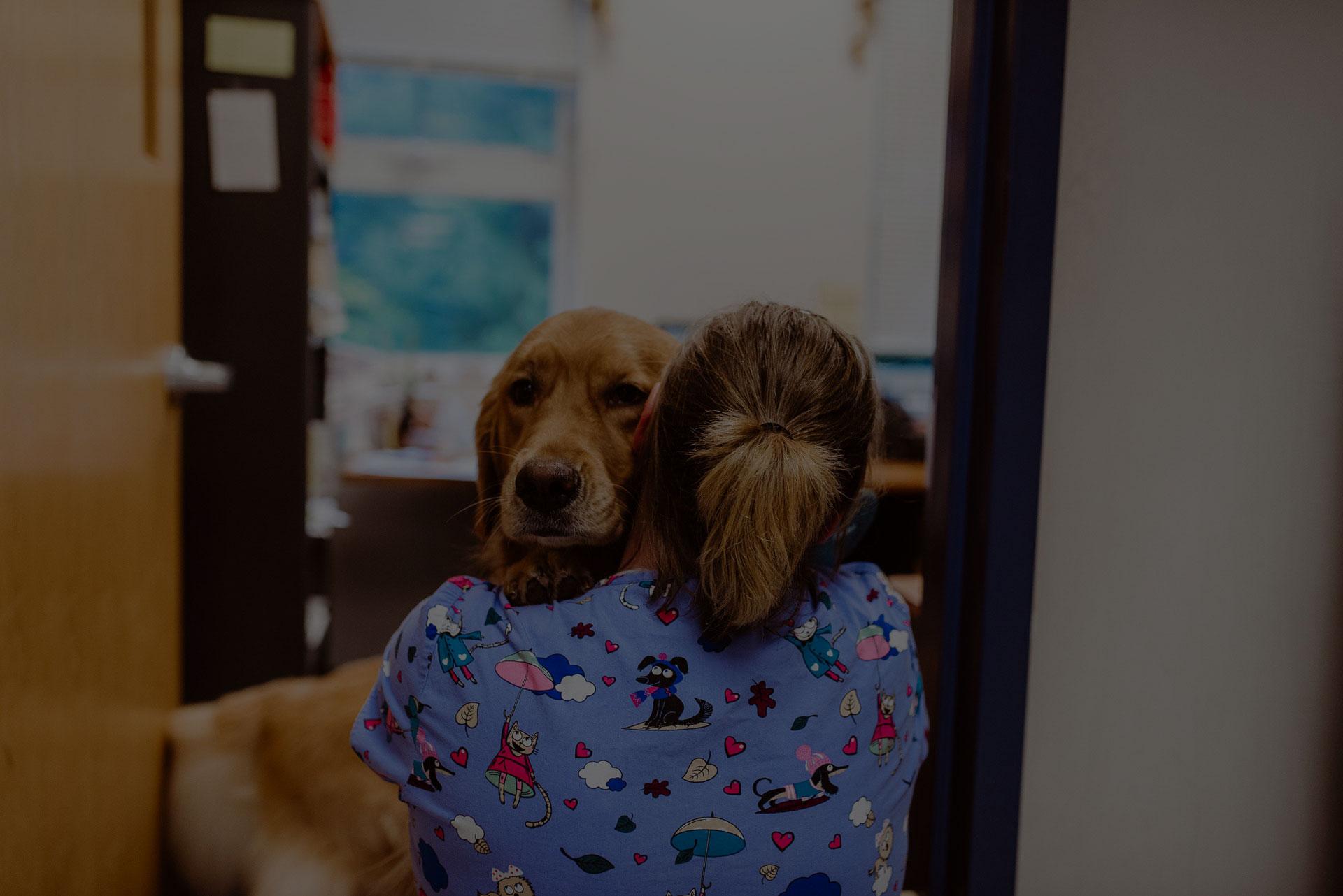 Veterinary Care - Vet In Franklin | Acorn Animal Hospital